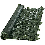 Siepe Sempreverde Lauro