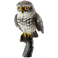 Little owl with flapping wings
