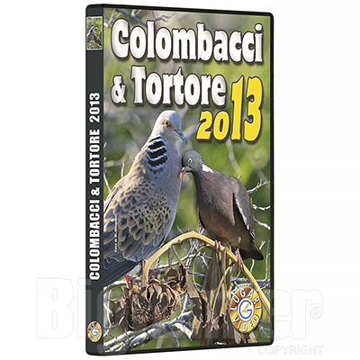 Video Caccia ai Colombacci & Tortore 2013 60 Minuti