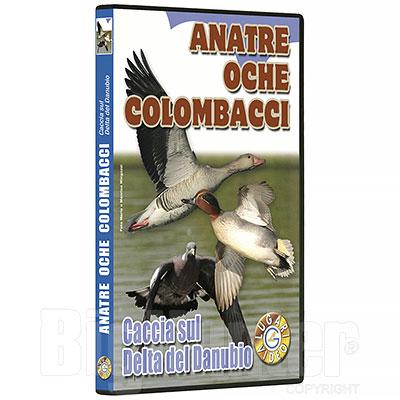 Video Caccia alle Anatre Oche Colombacci 70 minuti