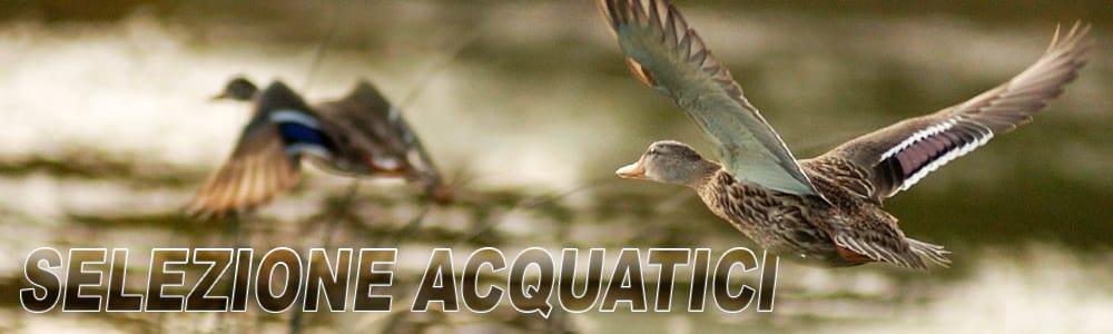 caccia agli acquatici